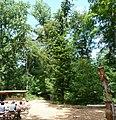 Kletterwald - panoramio (3).jpg