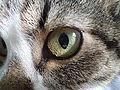 Kocie oko.JPG