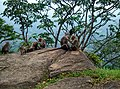 Kollengode South, Kerala, India - panoramio (46).jpg