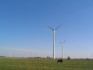 Cow with wind turbines, Dithmarschen.