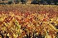 L'automne au Castellet - 02.jpg