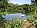 Lago di Mongiana Bello.jpg