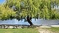Lake Esplanade, Queenstown (482916) (9484712786).jpg