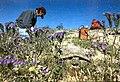 Lake Mead 0068.jpg