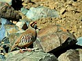 Lamayuru image chukar 2.jpg