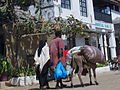 Lamu eseltransport.JPG