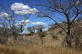 paysage de savane arborée