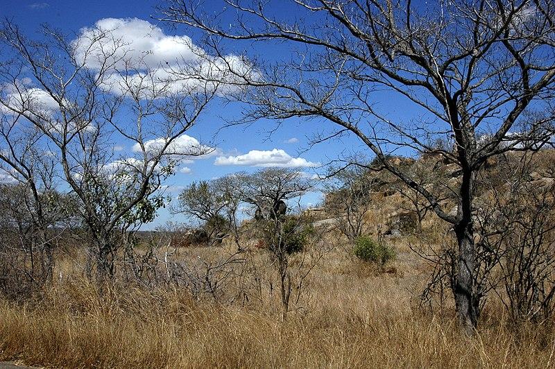 File:Landscape kruger-park.jpg