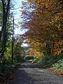 Lane towards Coomb Mill - geograph.org.uk - 1075797.jpg