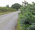 Lawn Lane near Old Dalby - geograph.org.uk - 906793.jpg