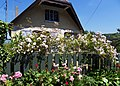 Le Bois-de-Cise clôture fleurie 1.jpg