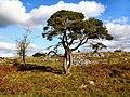 Le Pirouette - geograph.org.uk - 997999.jpg