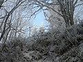 Le gel - panoramio.jpg