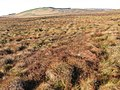 Leftshaw Hill hillside towards White Hill - geograph.org.uk - 610278.jpg