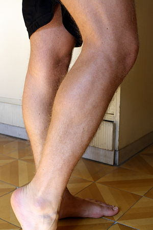 Calf (leg) - The calf is the back portion of the lower leg