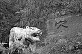 Leshan Sights (BUDDHA-BUDDHISM-CHENGDU-SICHUAN-CHINA) (2165328839).jpg