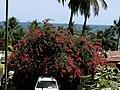 Liberia, Africa - panoramio (67).jpg