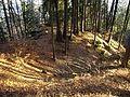 Lichtenberg-2.jpg