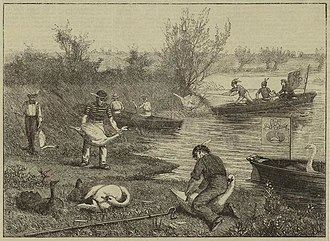 Swan Upping - Image: Life on the upper Thames swan upping (1875)