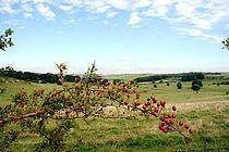 Lincolnshirewolds.jpg
