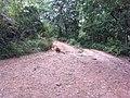 Lions at neyyar wildlife sanctury.jpg