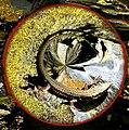 Lizard Totem (3231471409).jpg