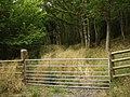 Llanigon, gated woodland track (apparently disused) - geograph.org.uk - 1506840.jpg