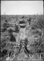 Loading cut flax in Makerua by George Leslie Adkin (1888-1964).png