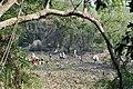 Locals fishing at Koshi Tappu Wildlife Reserve.jpg