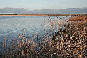 Loch of Strathbeg - Looking south-east across the loch
