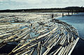 Logs in Ångermanälven river at Hälla (Hielle), Åsele, Lappland, Sweden (16713533345).jpg