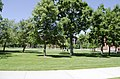 Looking NW across Quad at Traphagen Hall - Montana State University - 2013-07-09.jpg