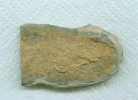 A carved stone tool, possibly a chisel-head.