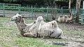 Lovech Zoo Iz8.jpg