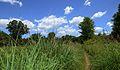 Lovely (Hot) Day in Canadian Prairie Habitat (27948373225).jpg