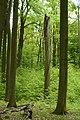 MOs810, WG 2014 20, OChK Las Miejski (Buczyna Helenopol natural reserved) (7).JPG