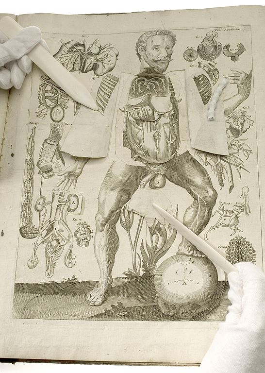 File:Male anatomical figure, view of internal organs Wellcome ...