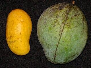 Keitt (mango) A type of mango cultivar