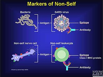 Polyclonal B cell response - Examples of substances recognized as foreign (non-self)