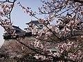 Marunouchi, Matsuyama, Ehime Prefecture 790-0008, Japan - panoramio (79).jpg