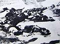 Masakr vo selo Dabnica, 1942.jpg