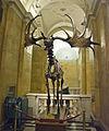 Megaloceros (15652949996).jpg