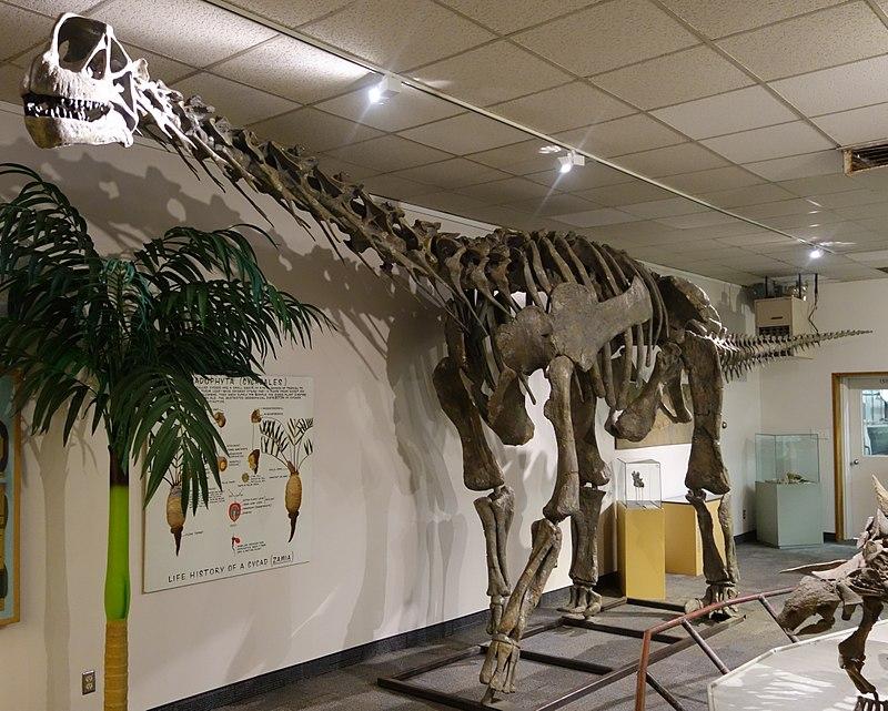 Moabosaurus BYU 1.jpg