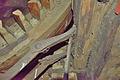 Molen Grenszicht, Emmer-Compascuum kap vang koebout (3).jpg
