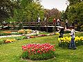 Morges-Fete Tulipe 7.jpg