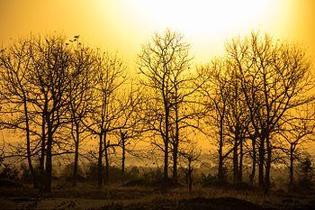 Morning Field, Gadariya, Madhya Pradesh.jpg