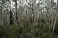 Mount Aggie, Brindabella Range, Namadgi National Park 01.jpg