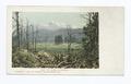 Mt. Shasta, Mt. Shasta, Calif (NYPL b12647398-62091).tiff