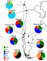 MtDNA haplogroup linage map for Southern South America populations.png