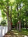 NMS Brachenfelder Straße 69 Lindenallee.JPG